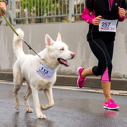 A Comprehensive Guide To Running With Your Dog